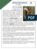 02 Ardilla Huanaco Jaquie Reforzamiento