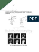 5- El sistema de fonación humana-Sonido
