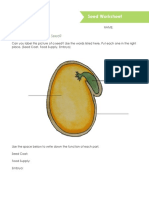 worksheet-what-are-the-parts-of-a-seed  1