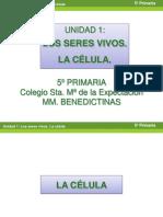tema1losseresvivos-laclula-120908132254-phpapp01.pdf