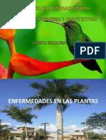Enfermedades en las plantas.pptx