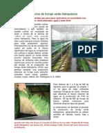 Produccion de forraje verde hidroponico INTAGRI.pdf