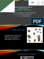 Presentación Multimedia Investigación Documental y de Campo 2