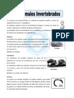 Ficha de Trabajo Invertebrados