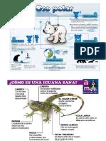 Ejemplos de Infografias
