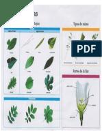 Maleta Viajera - Tipos de hojas.pdf