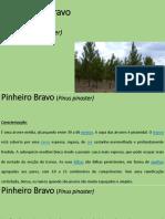 Pinheiro Bravo_Apresentação Curta