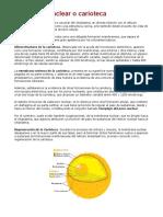 Membrana nuclear o carioteca.docx