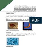 Bacterias Quimioautótrofas