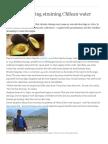 Chilean avocado