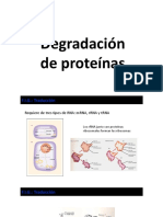 Síntesis y Degradación de Proteínas