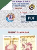 Tejido Epitelial Glandular Final