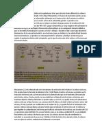 Regulación de rubisco.docx