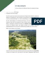 Contaminacion Del Bosque