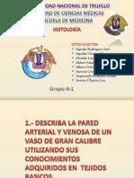 Histologia de Los Vasos Caracteristicas y Diferencias