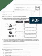 netau 1 (1).pdf