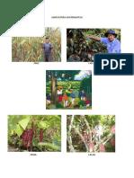 agricultura guatemalteca.docx