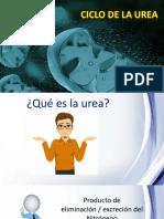 tmp_16542-CICLO DE LA UREA1000217648.pptx
