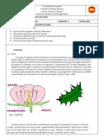 INFORME DE BOTANICA NUMERO 3 copia[897].docx