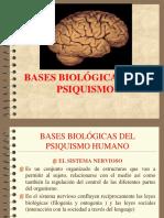 BASES BIOLÓDGICAS DE LOS PROCESOS PSÍQUICOS.ppt