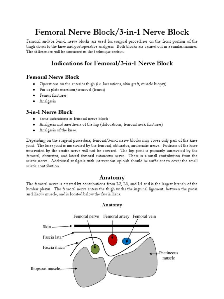 h17femoral.pdf   Anesthesia   Limbs (Anatomy)