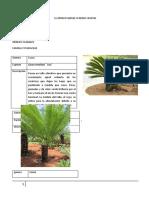 Taxonomia Vegetal.