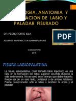 Cx Plastica Fisura