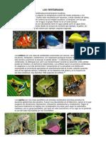 Los Vertebrados e Invertebrados con información e imágenes