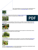 10 Plantas Con Definicion