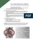 Repaso de La Lección - Cordaje y Manipulación de Material