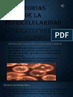 Pluricelularidad bioligi