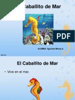El Caballito de Mar_Agustina