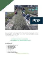 Plantulas Producidas en Vivero
