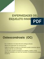 Enfermedad Del Esqueleto Inmaduro