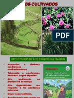 Caracteristicas de pastos cultivados (sem 3).pdf