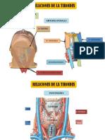 Anatomia Semana 11