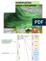 Chlorophyta_2016.pdf