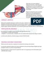 C-8 Int. Delgado-bazo y Pancreas