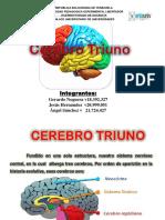 Cerebro Triuno ..