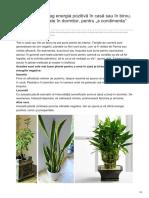 7 Plante Care Atrag Energia Pozitivă În Casă