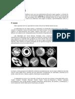 Diatomitas - Rocas Carbonatadas y Salmueras