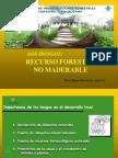 Los Hongos Recurso forestal No Maderable