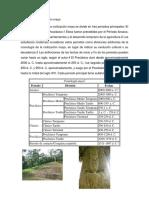 Historia de La Civilización Maya