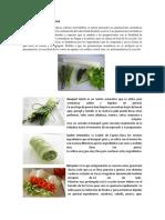 GUARNICIONES AROMATICAS.docx