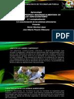 pinacho agroecologia.pptx