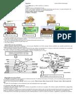 Producción y monocultivo de soja  en América latina y en Argentina.docx