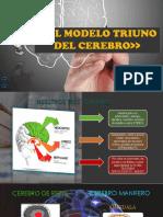 el modelo triuno del cerebro-aprendizaje