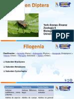 336393683-Presentacion-Orden-Diptera.pptx