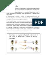 Partenogenesis y Gynogenesis