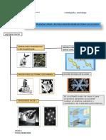 Cristalografia y Mineralogia